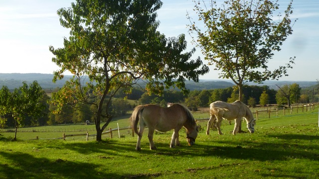 GB chevaux à coté du gîte proche des châteaux et de Lascaux en Dordogne